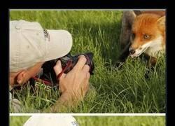 Enlace a Animales apasionados de la fotografía