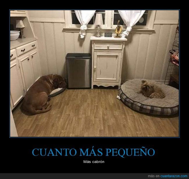 camas,grande,jaja,pequeño,perro