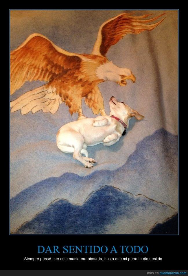 águila,humor,manta,perro,vuelo