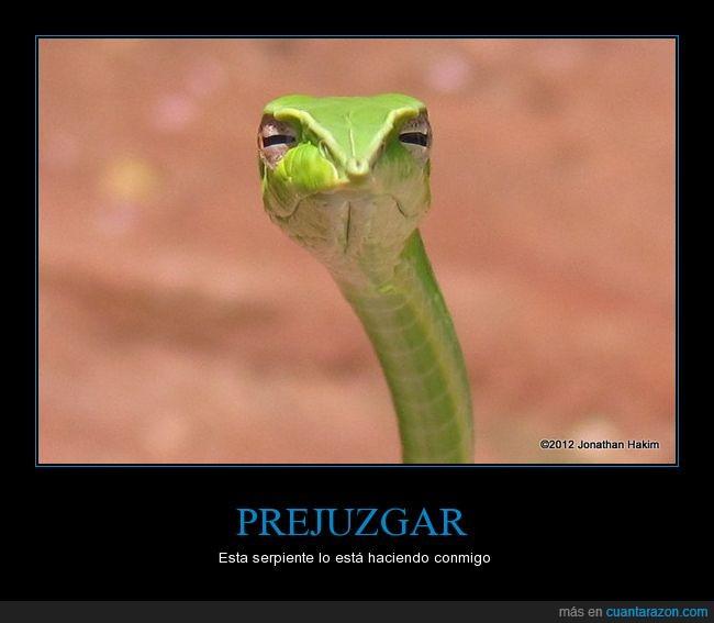 jaja,juzgar,lejos,serpiente