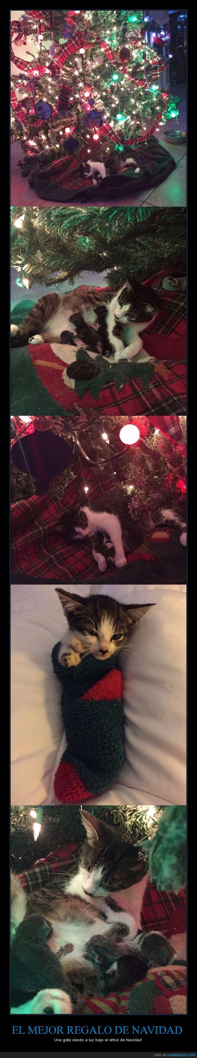 árbol de navidad,embarazo,gata,gatitos,parir
