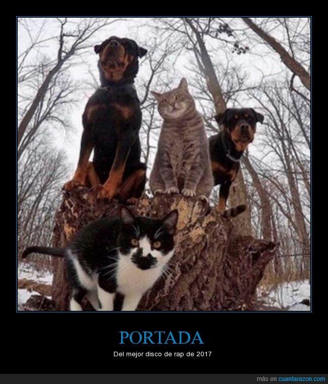disco de rap,gatos,perros,portada