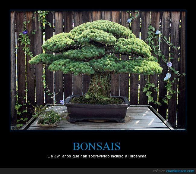 árbol,bonsais,hiroshima