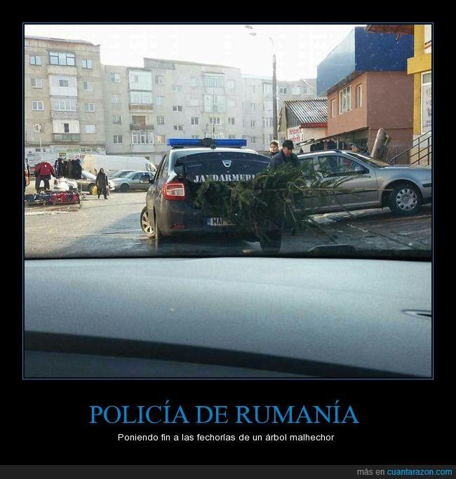árbol,arresto,policía,Rumanía