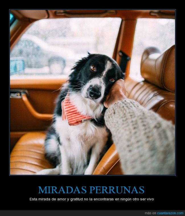 amor,can,cartel,gratitrudr,ojos,perro