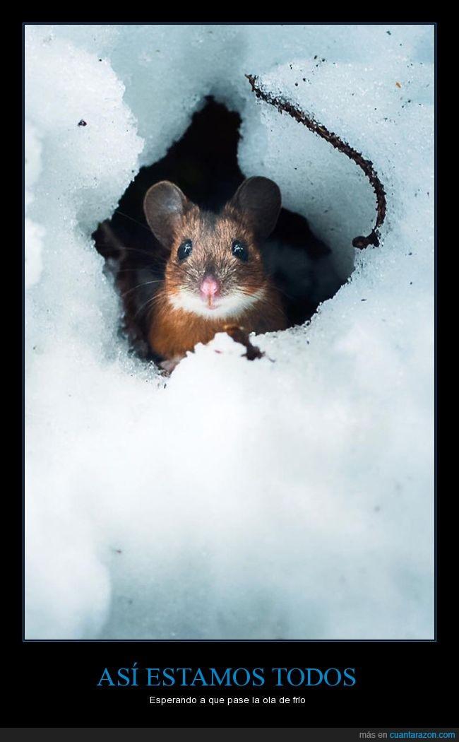 frío,madriguera,nieve,ratón