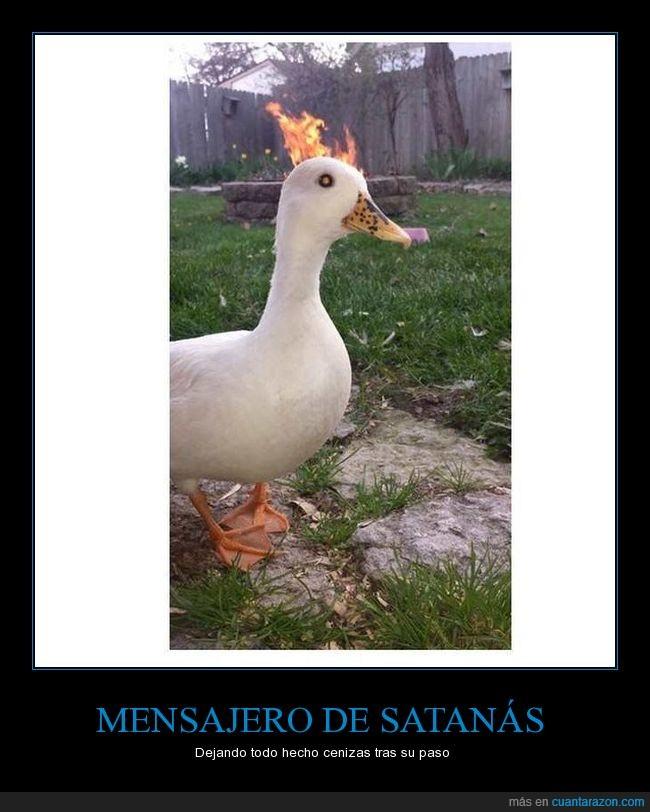 fuego,jaja,pato,satanas,wtf