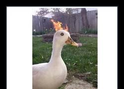 Enlace a Este pato es el verdadero mal