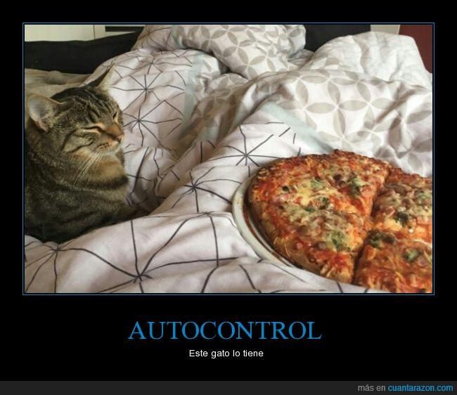 autocontrol,comer,gato,pizza