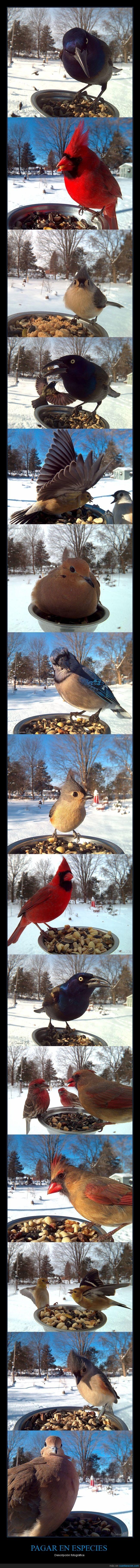 aves,comida,exóticos,fotografiar,pájaros