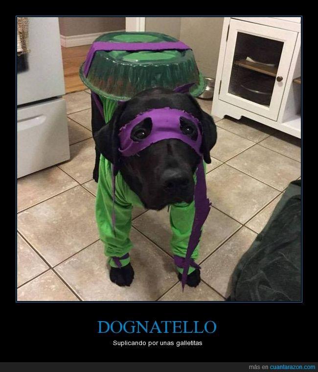 antifaz,cara,dognatello,perro
