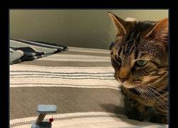 Enlace a La cara de indignación del gato es épica