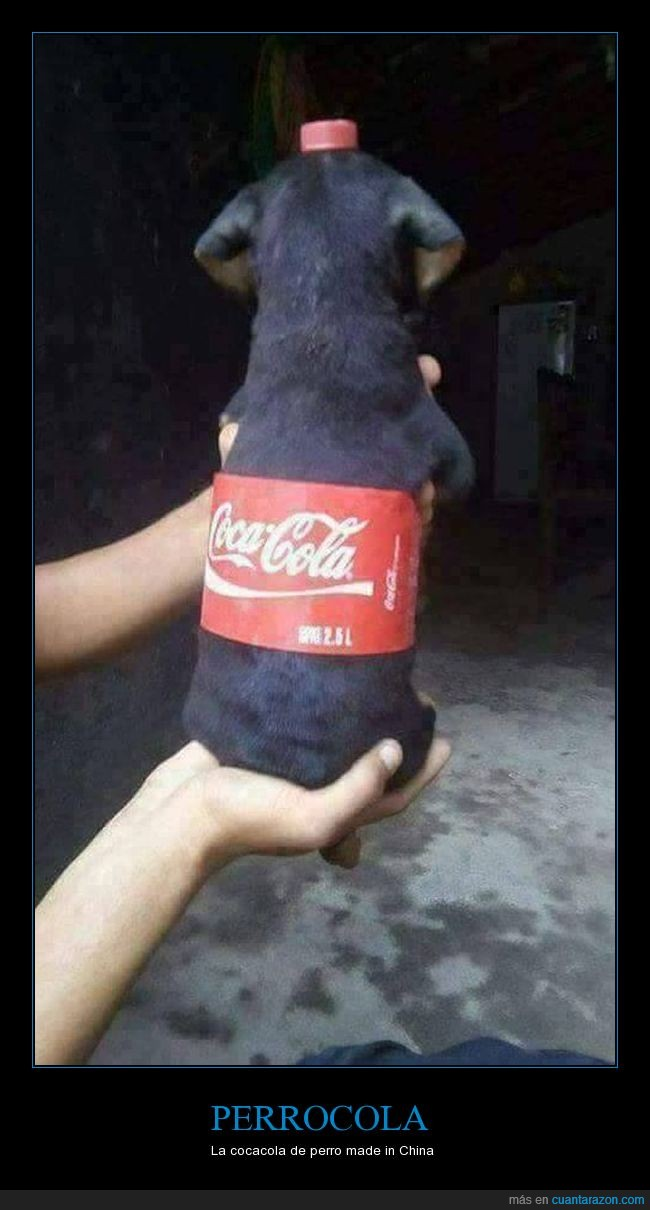 china,cocacola,cola,perro