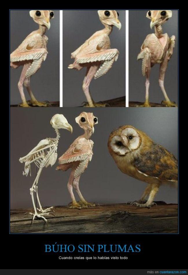 ave,búho,sin plumas