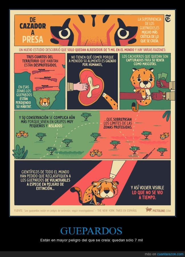 extinción,guepardos,reflexión,vida