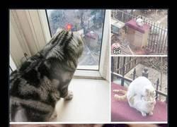 Enlace a Pobre gatito :(