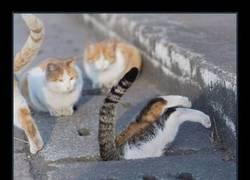 Enlace a Gatos cazando ratas en alcantarillados de piedra, el recopilatorio que estabas esperando