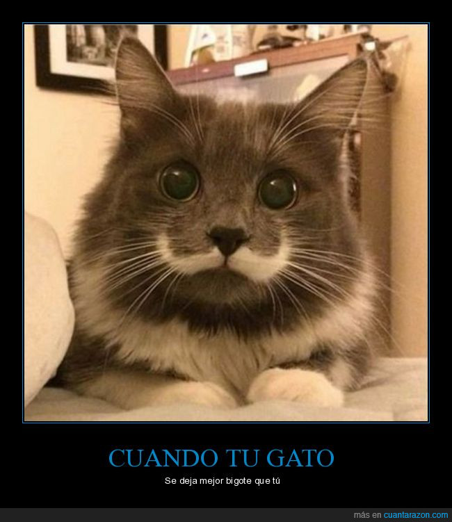 bigote,gato