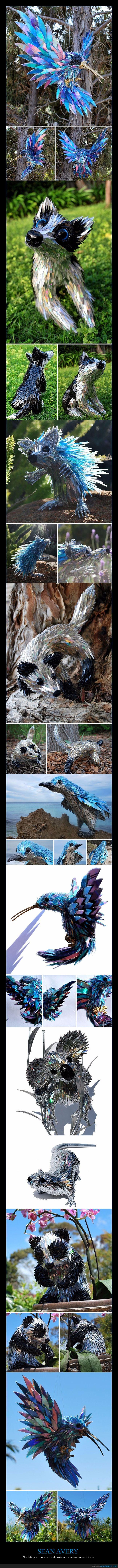 animales,cd,colibrí,esculturas,koala,pájaro