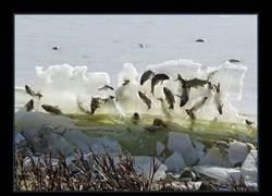 Enlace a Unos peces congelados en pleno salto desconciertan a todo el mundo