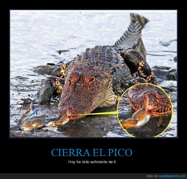 caimán,cangrejo,cocodrilo