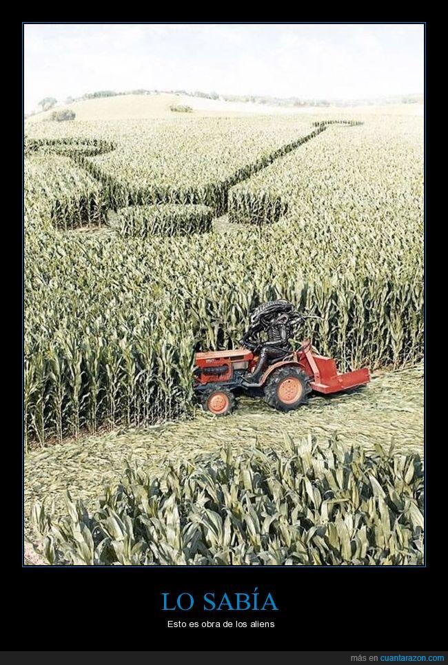 maíz.alien.humor,sembradío,tractor