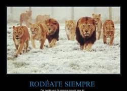 Enlace a Palabra de león