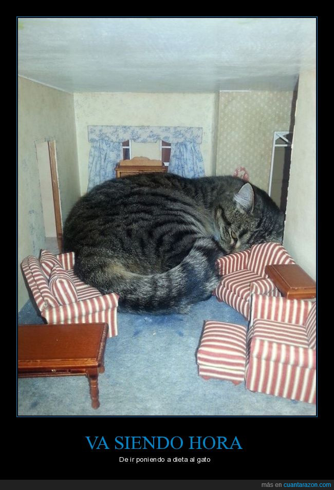 casa de muñecas,gato,gigante
