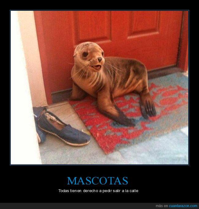 calle,foca,puerta