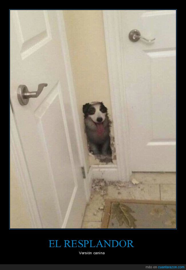 agujero,pared,perro,rota