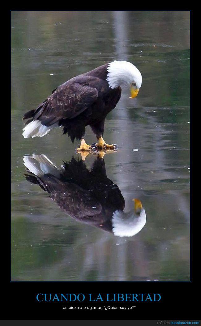 águila,calva,hielo,reflejo,USA