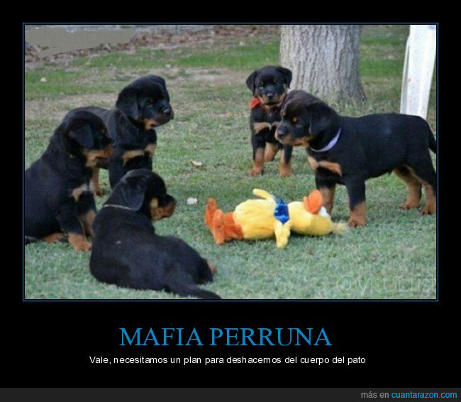 pato,perros,rottweillers