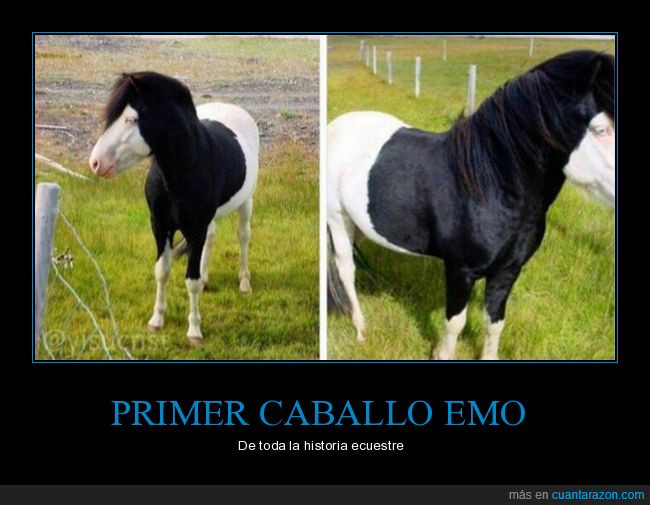 caballo,emo,peinado