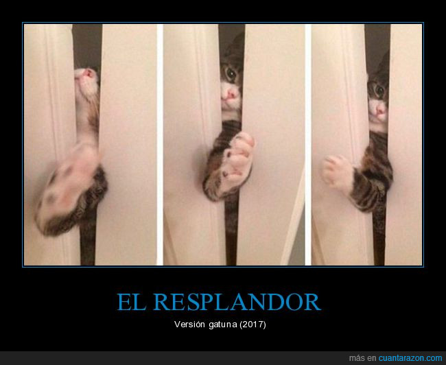 gato,puerta,resplandor