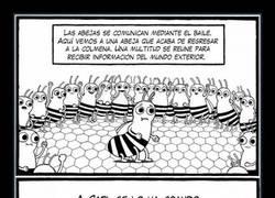 Enlace a El sistema de comunicación de las abejas es mucho más complejo que el de los humanos