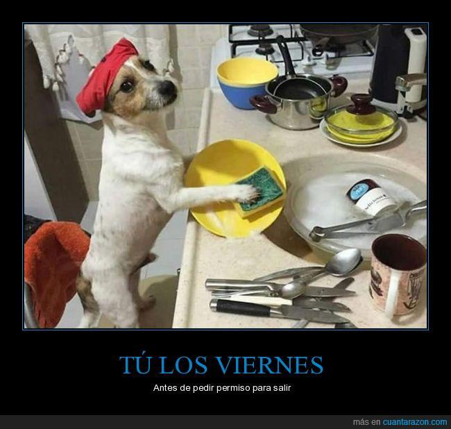 ayudar,fregar los platos,permiso,perros