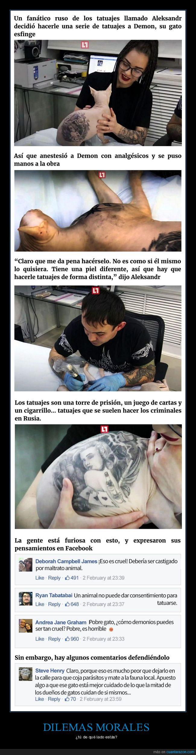 gato,sin pelo,tatuaje