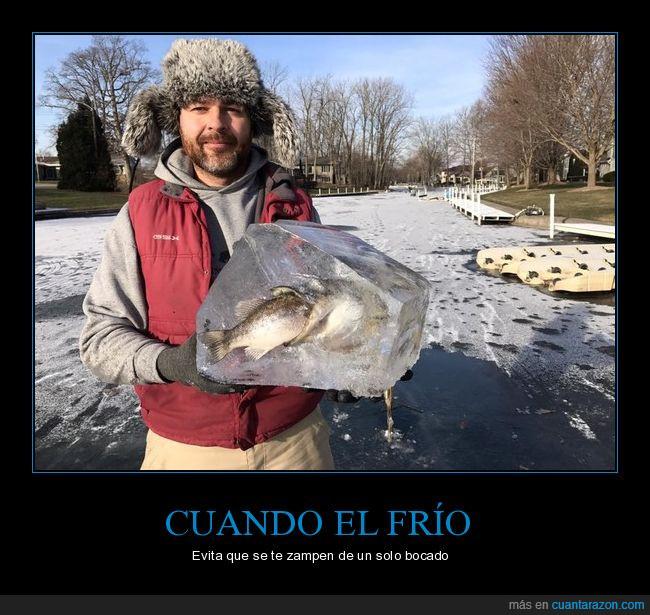 congelados,devorar,hielo,peces