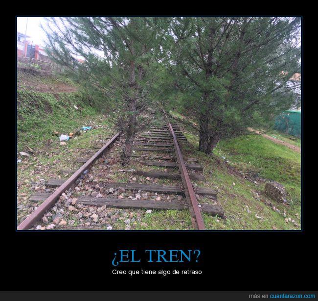 árboles,bosque,retraso,Tren,vías