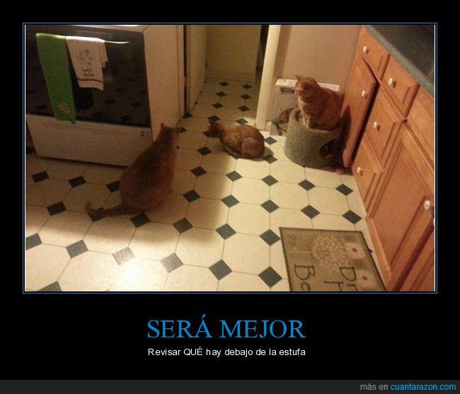 estufa,gato,mirar sospechosamente