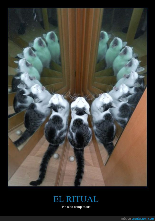 gatos,ritual