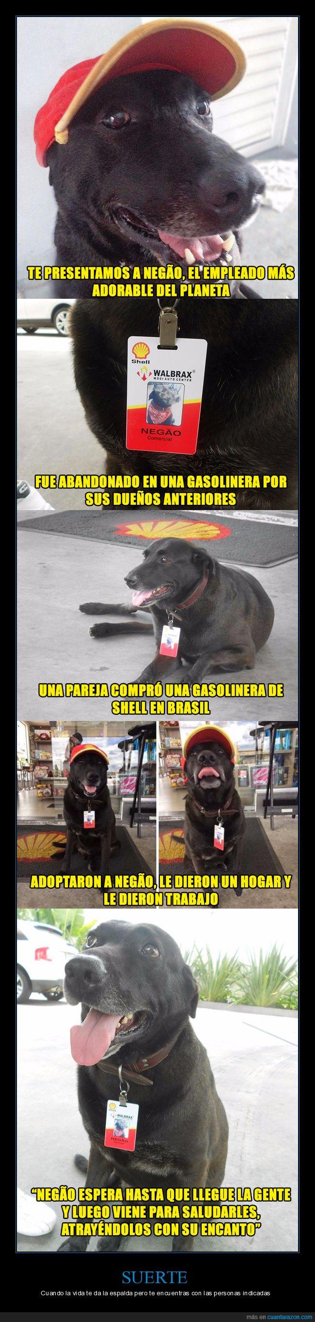 gasolinera,negao,perro