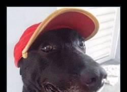 Enlace a Abandonan a este perro en una gasolinera pero su suerte cambia por completo