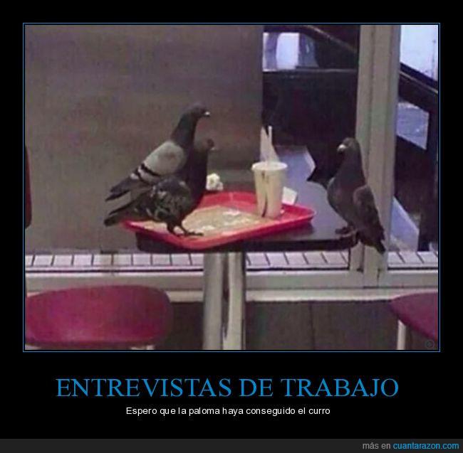 curro,entrevista,palomas,trabajo