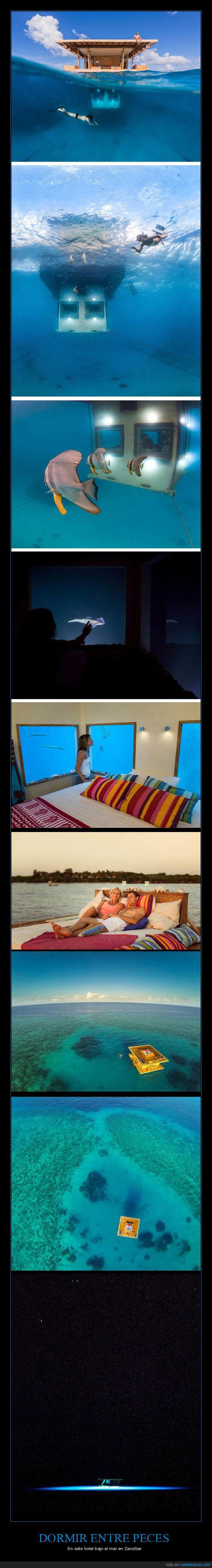 hotel,mar,peces
