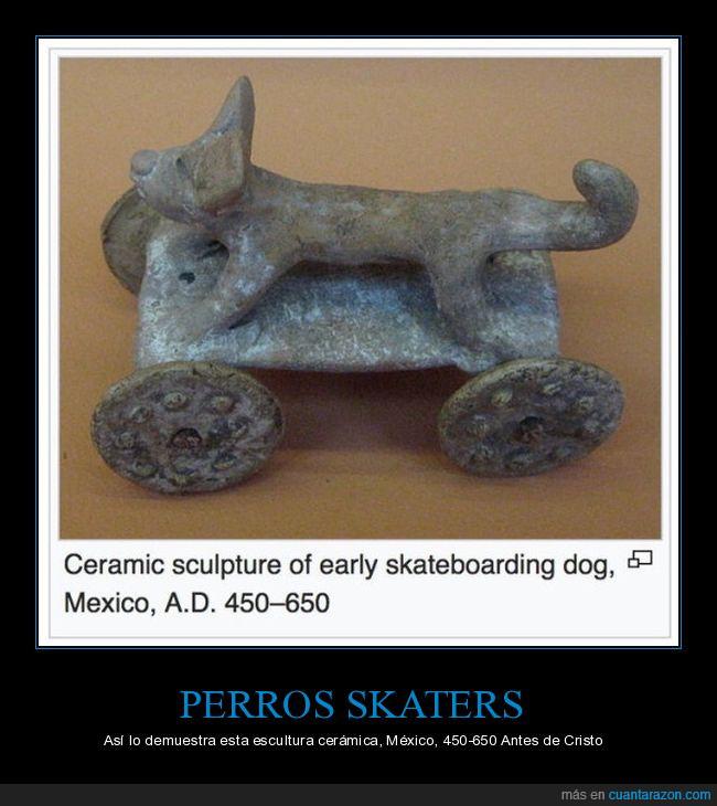 arqueología,can,perro,ruedas,skate