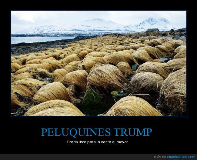 cabello,paisaje,paja,parecidos,Trump
