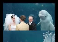 Enlace a Esta ballena presenciando una boda en un acuario desata la última batalla de Photoshop de Internet