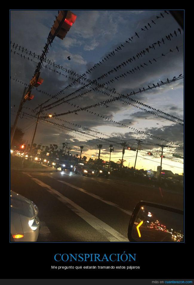 agrupación,cables,calle,pájaros