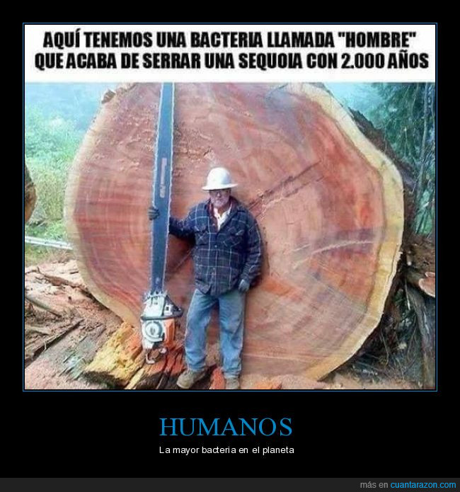 árbol,bacteria,humanos,sequoia